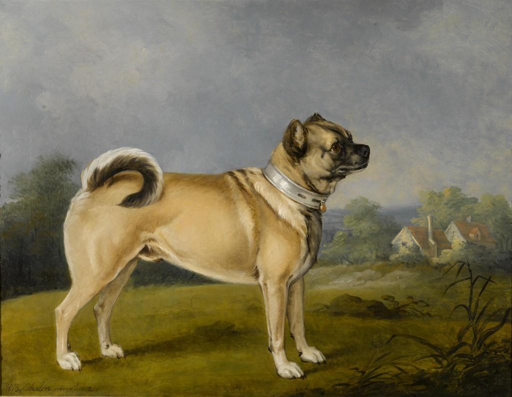 ¿Cuál es el origen de tu perro pug?